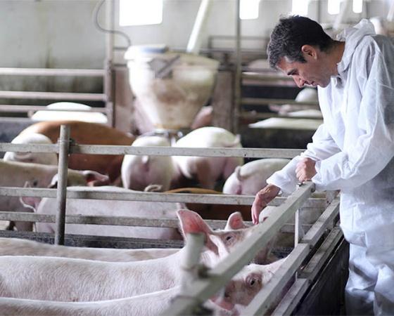 Sistema de Producción Animal